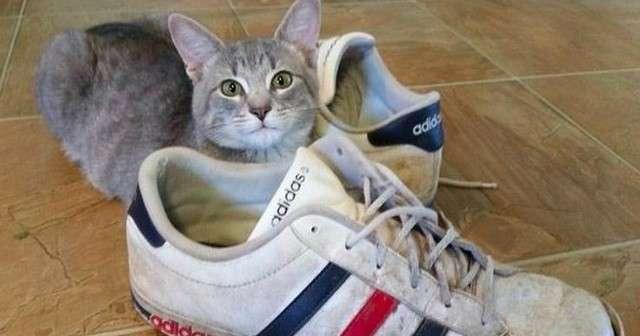 助けてくれた家族へ感謝の気持ちを表すために猫がとった不思議な行動にほっこり・・・ | Lenon