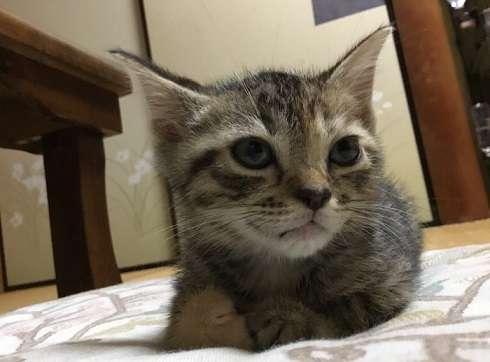 「帰らないで欲しいニャ~」 猫と一晩を過ごせる猫付き旅館「まいきゃっと湯河原」が癒される