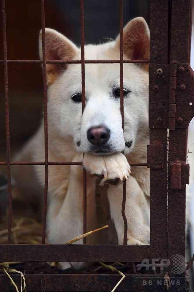 韓国・平昌の犬肉レストラン、五輪開催中のメニュー提供自粛を拒否 写真1枚 国際ニュース:AFPBB News