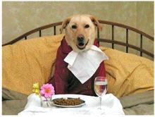 ペットの食費、どれくらいかかりますか?