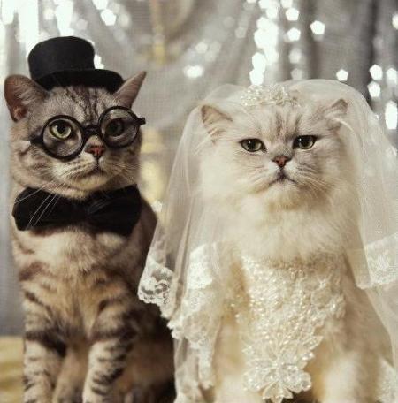 結婚までの道のり、トントン拍子?山あり谷あり?