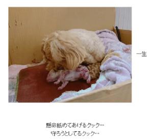 辻希美、12月に産まれた子犬が1か月間以上ブログにアップされない怪現象(1ページ目) - デイリーニュースオンライン