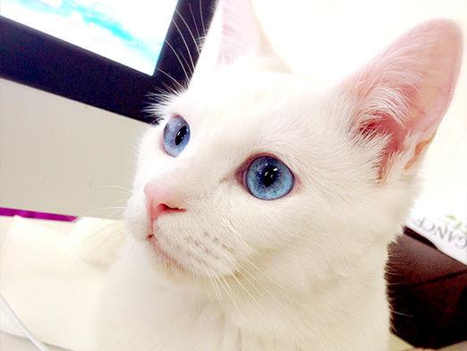 【どうしてこうなった】美猫セツちゃんの残念すぎる寝顔まとめ【閲覧注意】 - NAVER まとめ