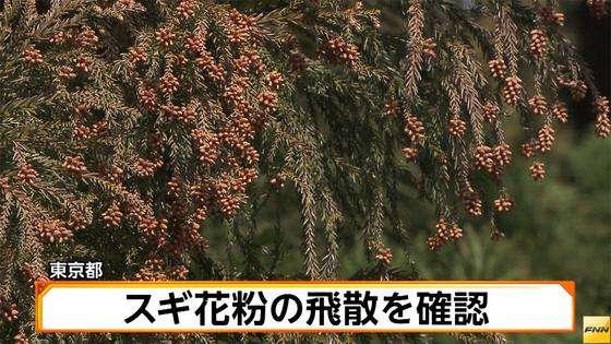 スギ花粉の飛散を確認 東京都(FNN)