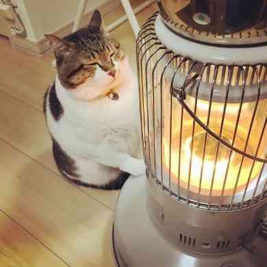 ストーブで暖を取る猫の「ぶさお」くん かわいいポーズと幸せそうな表情でこちらの心までぬくぬくに