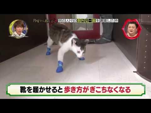 月曜から夜ふかし 長靴を履いた猫 - YouTube