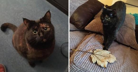 ネズミとかそういうの嫌いっぽかったんで...小動物の代わりに落ち葉を拾い集めて毎朝飼い主に届ける猫 : カラパイア