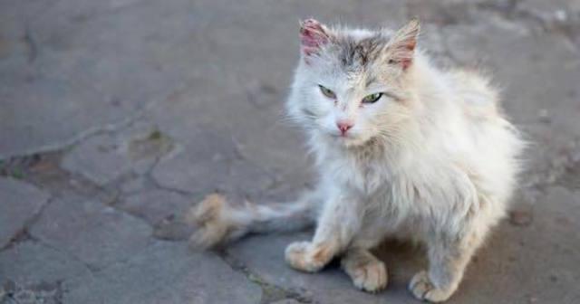 室内で飼っている猫が万が一脱走してしまったら!専門家も推奨する探し方、防止策がすごすぎる・・・ | Lenon
