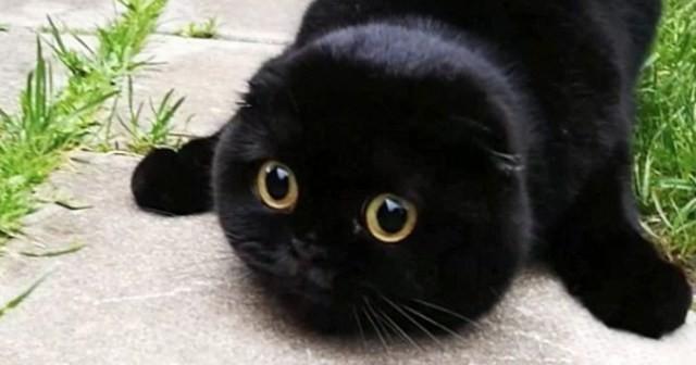 まん丸な顔が可愛い猫がターゲットをロックオンすると不思議な生き物に変身! | Lenon