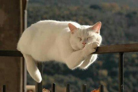 そこで寝るんかい!と言いたくなる画像を貼るトピ
