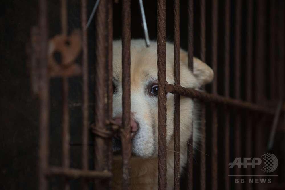 犬と猫の食用禁止に、罰金最高90万円 台湾 写真1枚 国際ニュース:AFPBB News