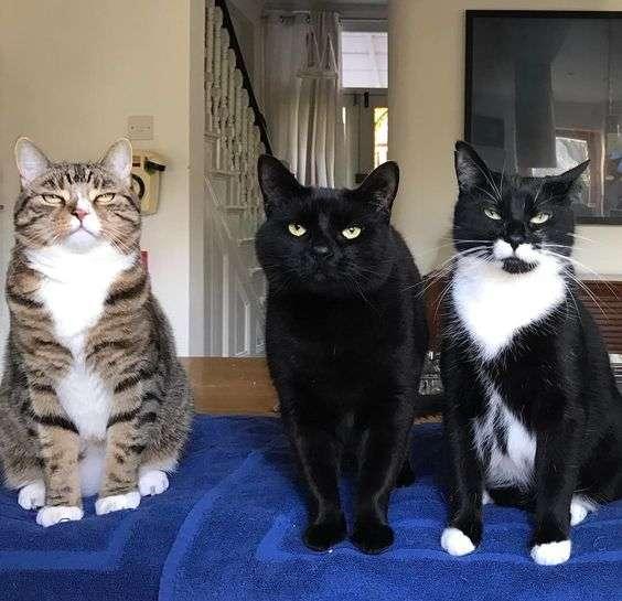 「ポーズを決めている猫」の画像を貼るトピ♪