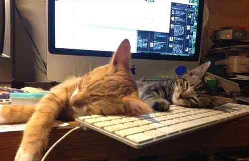 あなたが好きな猫ちゃんはどんな子かニャ? 猫に関するアンケートの調査結果を発表