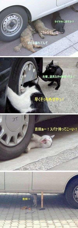 ガルちゃん猫カフェ24号店 開店しました♪ (初めての方も大歓迎!)