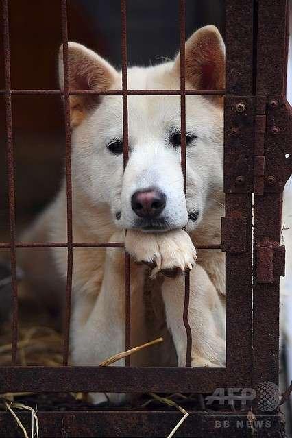 平昌の犬肉レストラン 五輪中の料理提供の自粛に対しほぼ全店舗が拒否 - ライブドアニュース