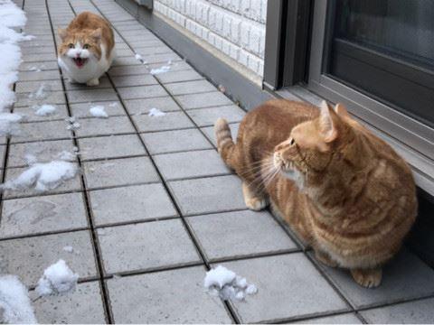 お気に入りの猫かうさぎの動画を貼るトピ