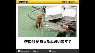 【ネタ】100コメまで賢くて101コメからアホになるトピpart2