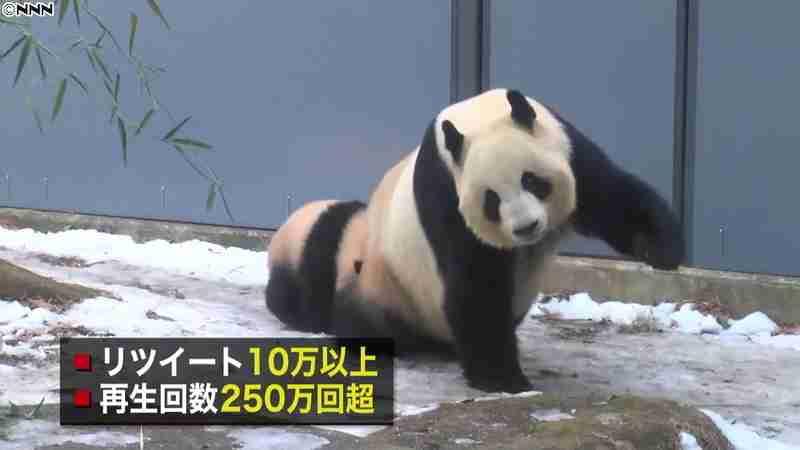 シャンシャンの美的「ひざカックン」話題に(日本テレビ系(NNN)) - Yahoo!ニュース