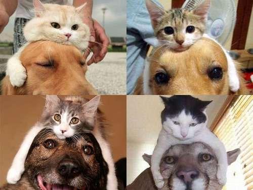 新ジャンル「頭に猫をかぶった犬」…とんでもなくかわいい写真いろいろ:らばQ