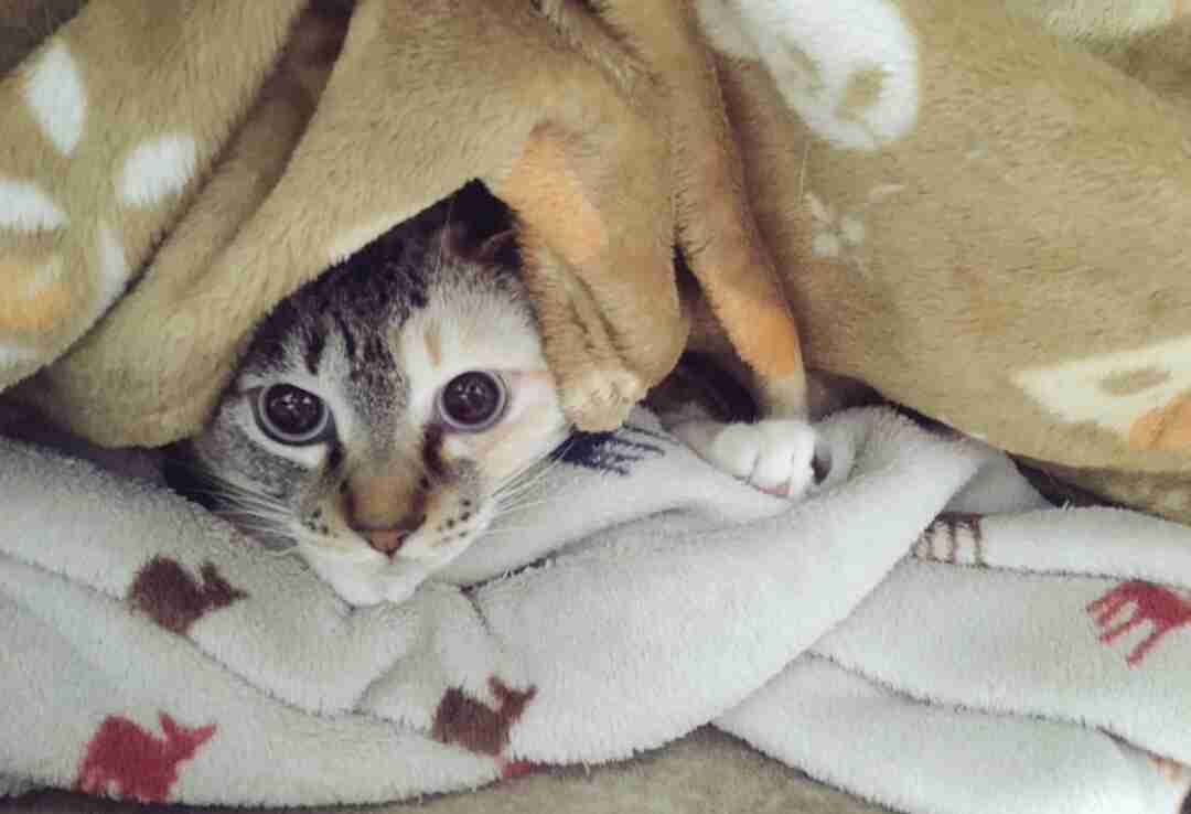 コタツ、ホットカーペット、毛布のしまい時