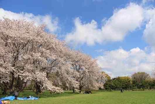 日本の絶景!桜が美しいスポットランキング