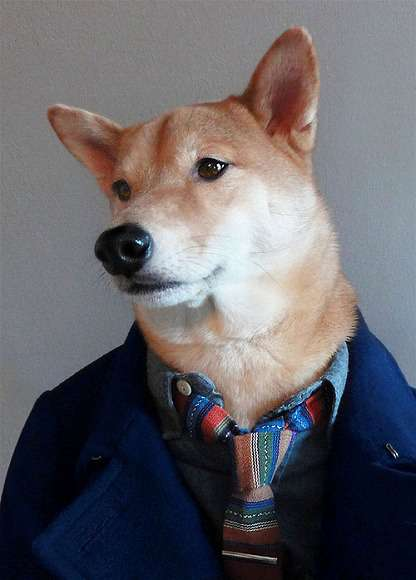 「人の顔に見える」と話題の『犬』が予想以上に人面犬