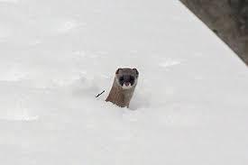 ひょっこりな動物が見たい