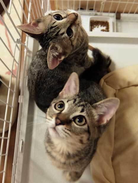 猫ブームが迎える悲劇 容易な「増産」で純血種の野良も増加〈週刊朝日〉 (AERA dot.) - Yahoo!ニュース
