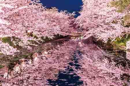 [コラム] 日本の絶景!桜が美しいスポットランキング - gooランキング