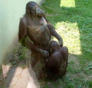 矢口真里、モー娘。脱退語る「私は恋愛体質。我慢して我慢して…」チンパンジー状態だった