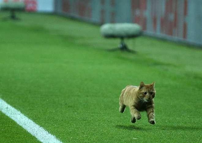 サッカーの試合中にネコが乱入、「まるでメッシだ」「傑出した才能」