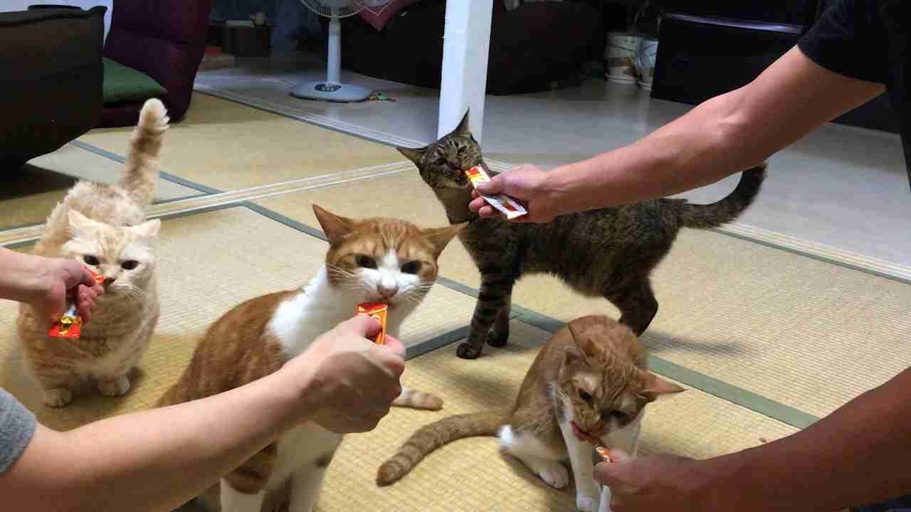 猫たちを狂わせる「CIAOちゅ~る」の魔力についてメーカーに聞いた