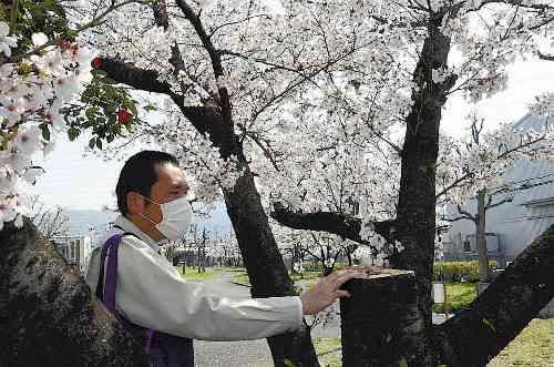 公園で桜11本切られる…3本は幹から切断 : 社会 : 読売新聞(YOMIURI ONLINE)