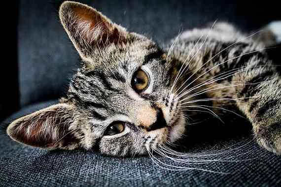 【キャリア猫との過ごし方】猫エイズの原因と症状、治療方法とは | ネコワラ!