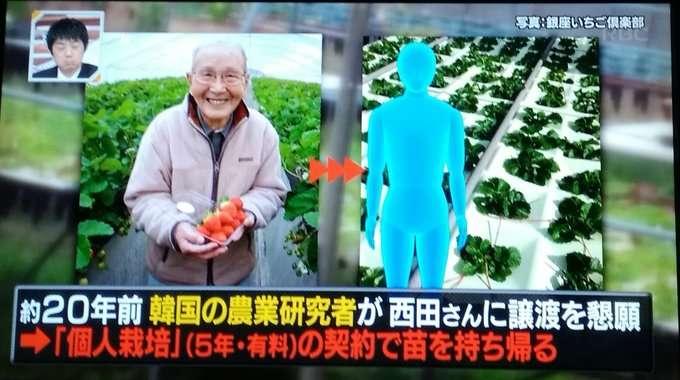 韓国の盗作イチゴ、日本の被害額は220億円…過去には中国に『白いんげん』も盗まれている  |  Share News Japan