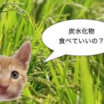 〜猫と炭水化物〜 グレインフリーフードとは何か | 猫専門病院の猫ブログ nekopedia ネコペディア