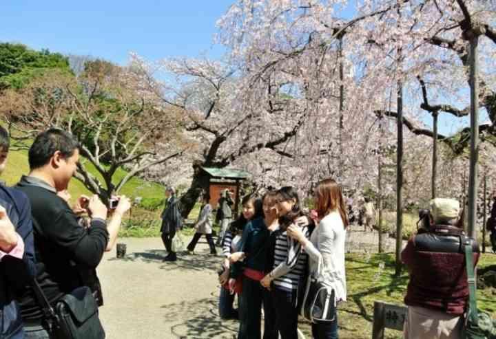 「日本で花見」の中国人が激増、旅行サイトの予約は前年比6割...|レコードチャイナ