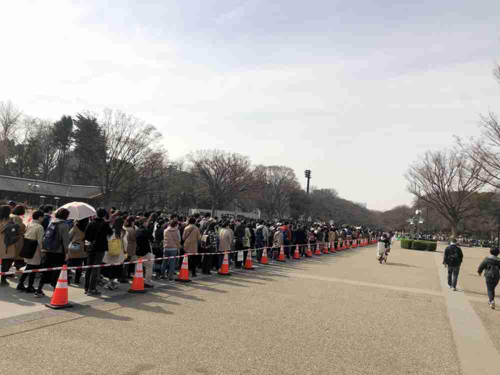 パンダ貸与を中国に要請…政府、神戸・仙台候補