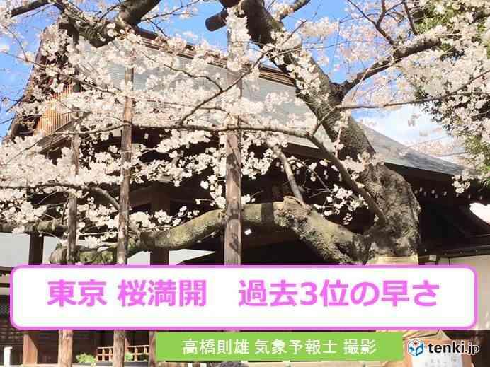 東京 桜満開 過去3位の早さ(日直予報士 2018年03月24日) - 日本気象協会 tenki.jp
