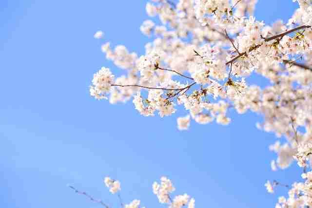 春分の日とは その意味 なぜ春分と秋分は国民の祝日なのか