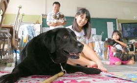 ペットと避難、一歩前へ 広島でも取り組み 環境省が昨年ガイドライン | sippo(シッポ)