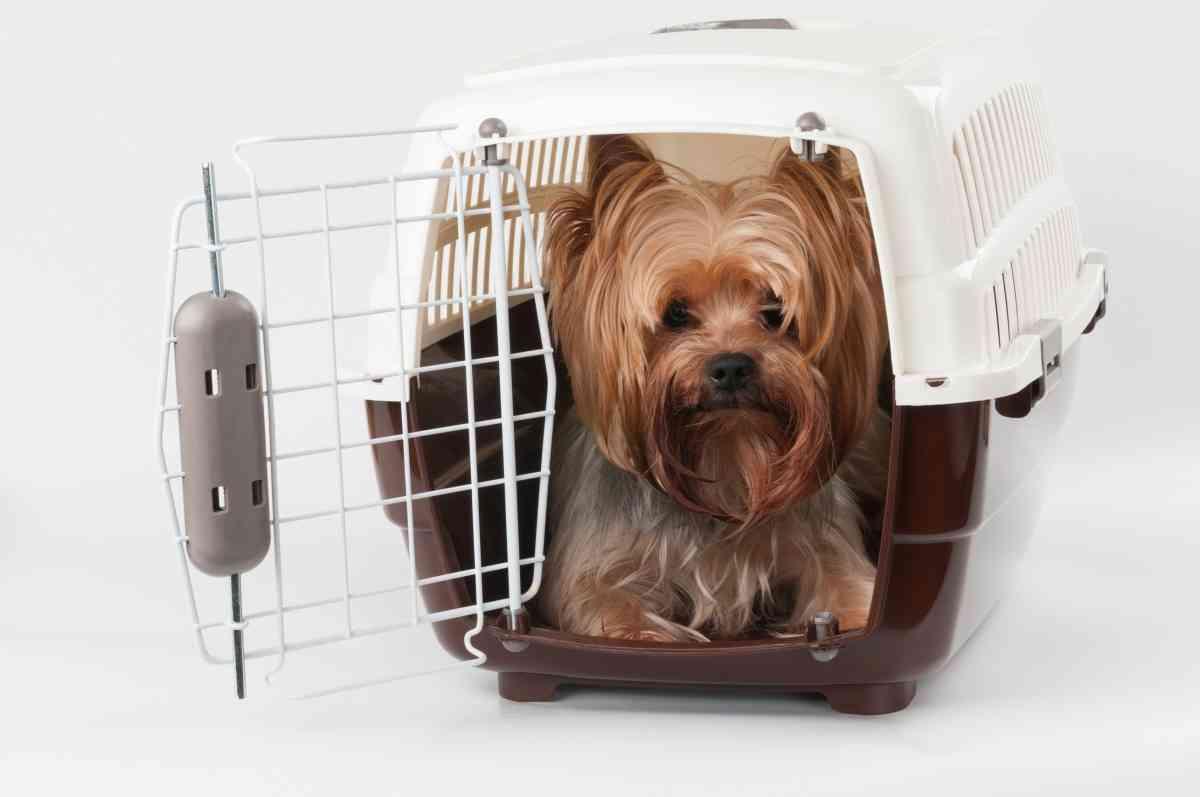 ペットの同行避難と同伴避難の違いについて