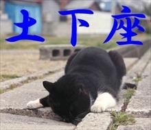「ニャンてこったい」必死すぎる表情が面白いネコたちのLINEスタンプが登場