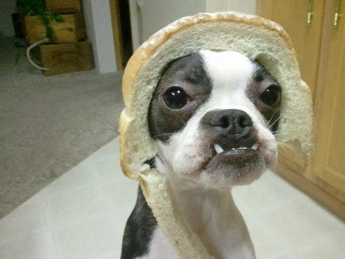 パンの耳が大好きな人ー!