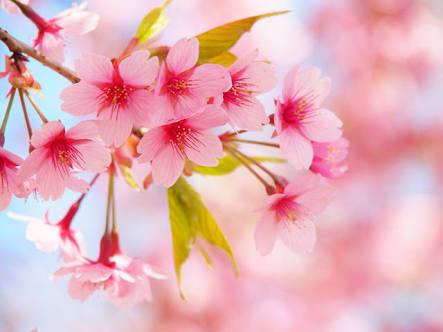 つなげて作ろう【春の別れの歌】