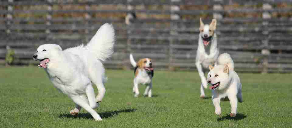 ドッグランで大型犬と衝突けが 飼い主に賠償命令