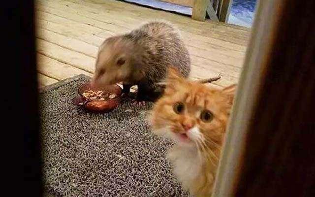 ご飯を奪われた猫の動揺っぷりに、ツボる人が続出! 「最高」「爆笑した」  grape [グレイプ]