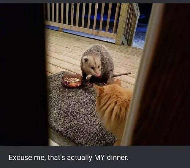 ご飯を奪われた猫の動揺っぷりに、ツボる人が続出!「最高」「爆笑した」