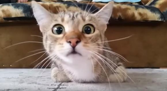 ニャ…ニャ…猫がホラー映画を見るとこうなる