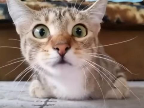 ニャ…ニャ…猫がホラーみるとこうなる|動画|Yahoo!映像トピックス